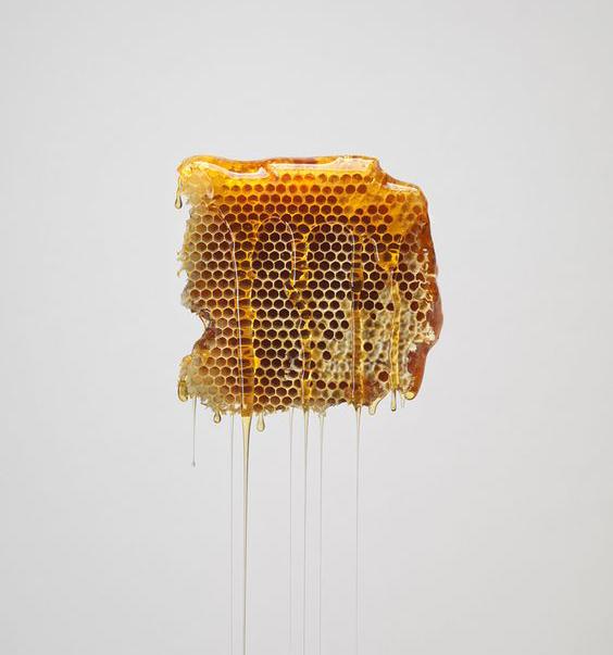 Récolte de miel en chute libre