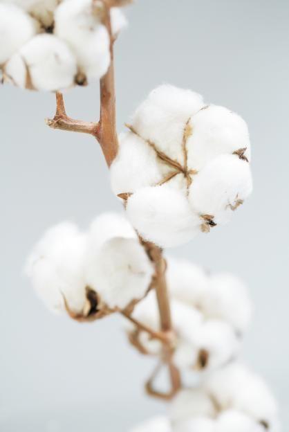 Coton Bio/ Organic Cotton